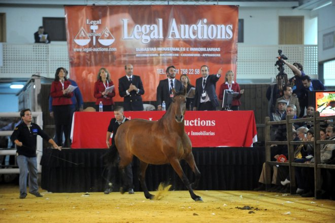 LEGAL AUCTIONS 1